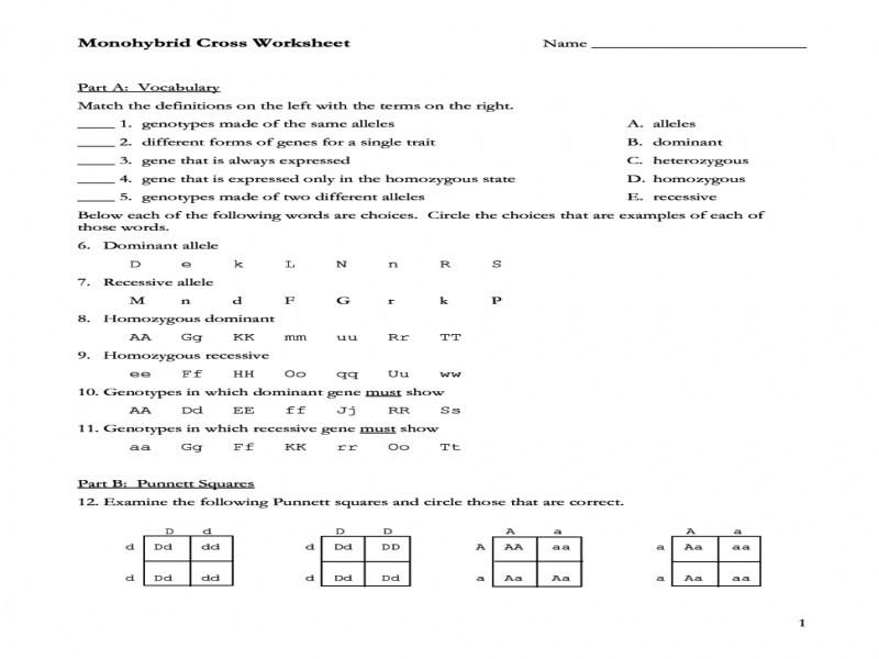 Monohybrid Crosses Worksheet Answers  123690