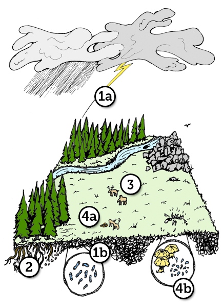 Nitrogen Cycle Diagram For Kids