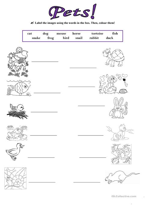 Pets! Worksheet