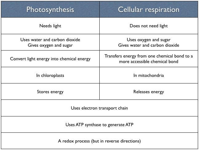 Photosynthesis And Cellular Respiration Comparison Worksheet