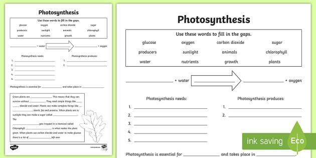 Photosynthesis Worksheet
