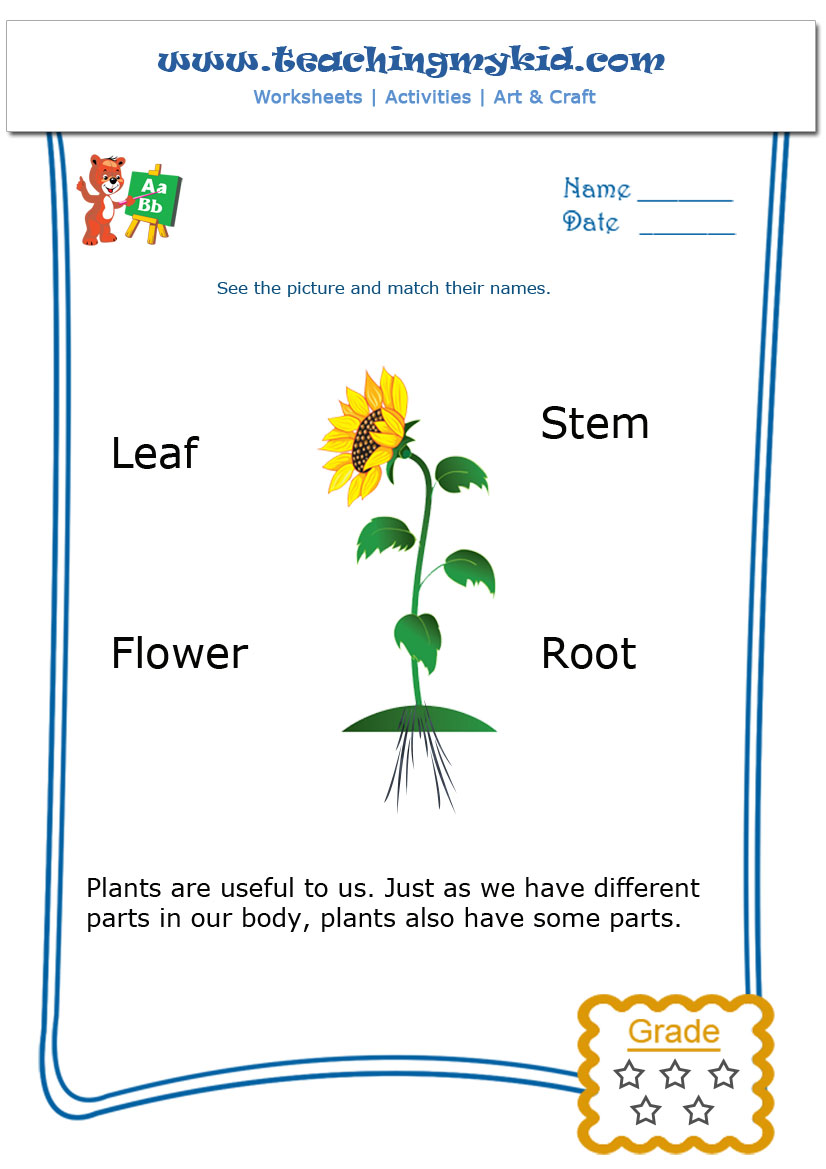 Plants Worksheet For Kindergarten 460978