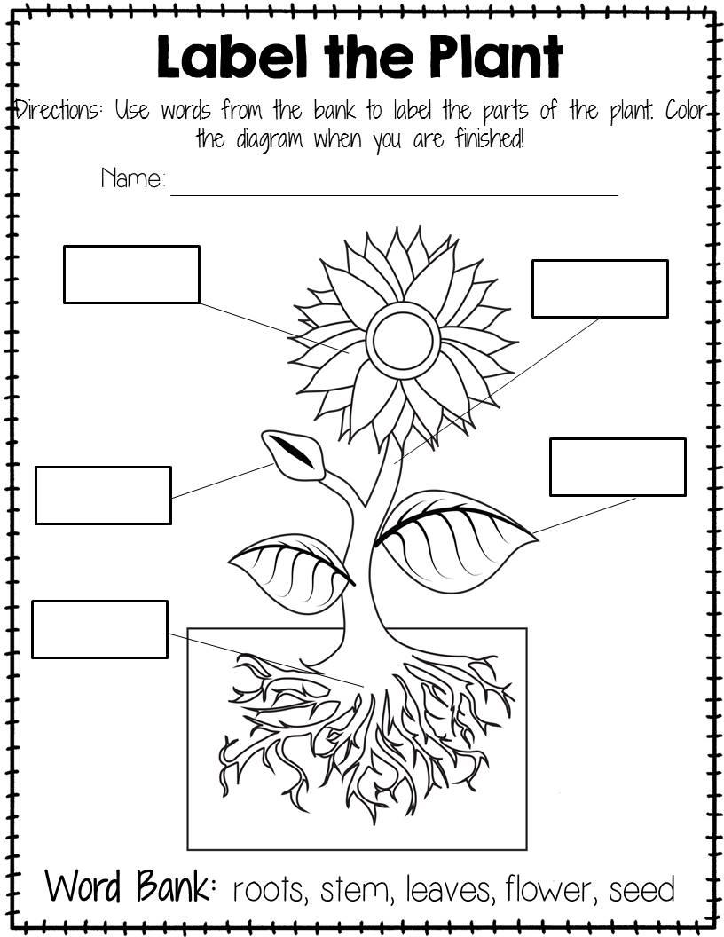 Plants Worksheet For Kindergarten 460990