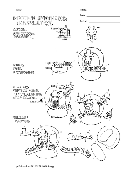 Protein Synthesis Translation Coloring Worksheet