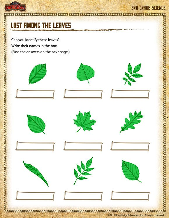 Types Of Leaves Worksheet Lost Among The Leaves