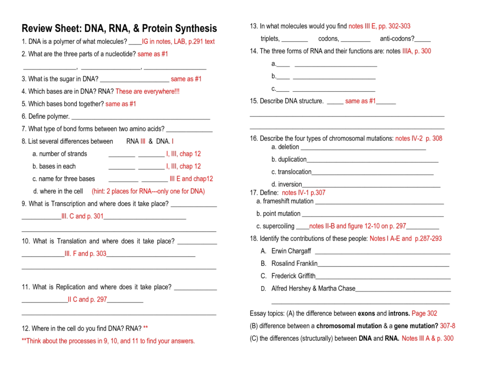 Worksheet Dna Rna And Protein Synthesis Answer Sheet 245801