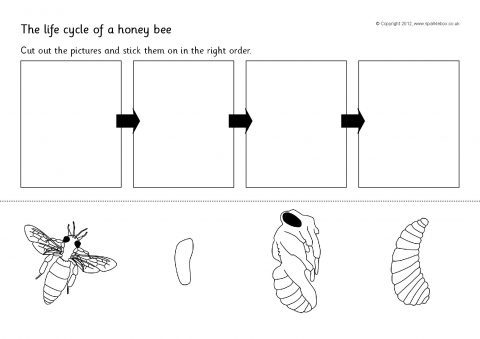 Honey Bee Life Cycle Cut And Stick (sb8454)