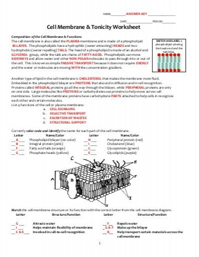Key Cell Membrane And Tonicity Worksheet Pdf