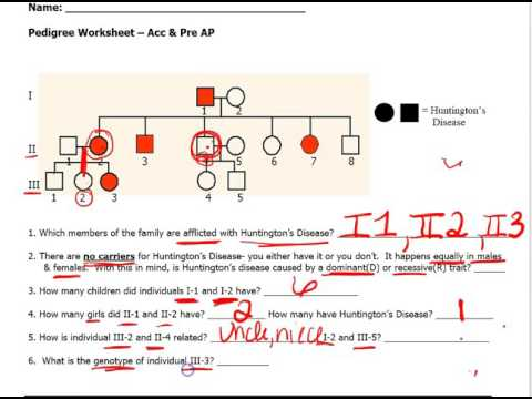 45 Pdf Genetics Pedigree Worksheet