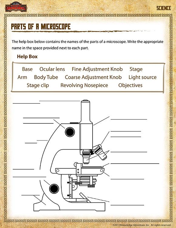 Parts Of A Microscope View – Free 5th Grade Science Worksheet