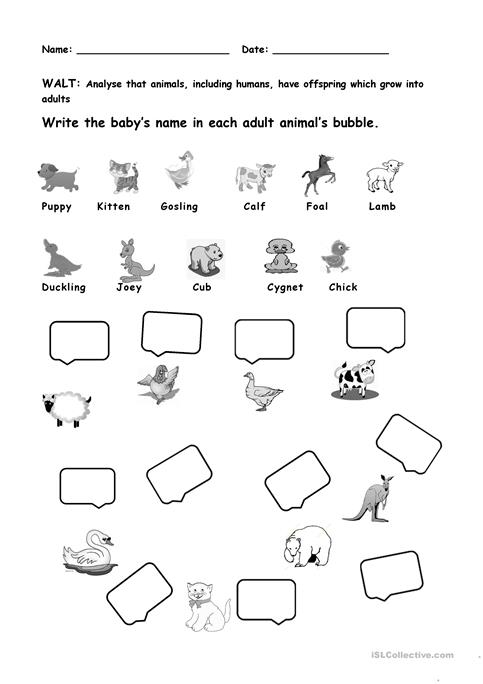 Animals And Their Young Ones Worksheet