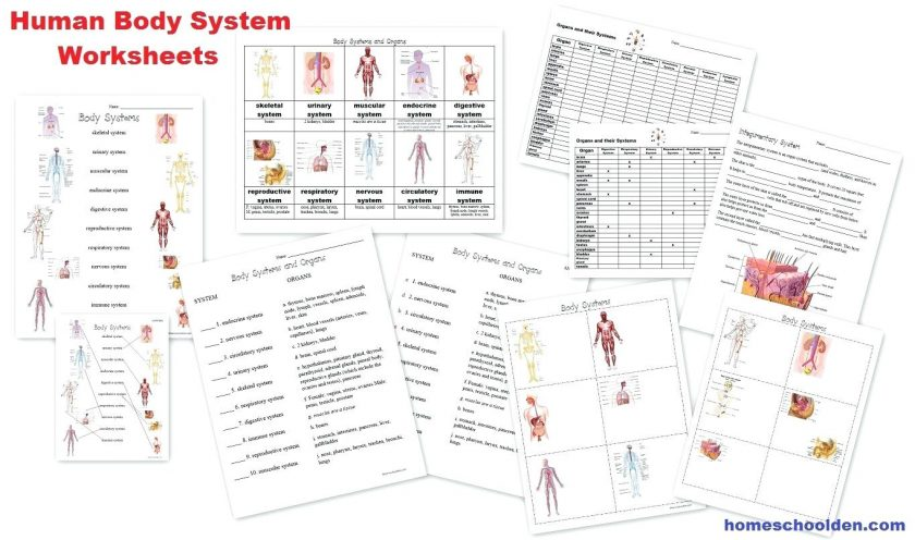 Body Systems Lesson Plans Plan Muscle Names Worksheets On Luxury