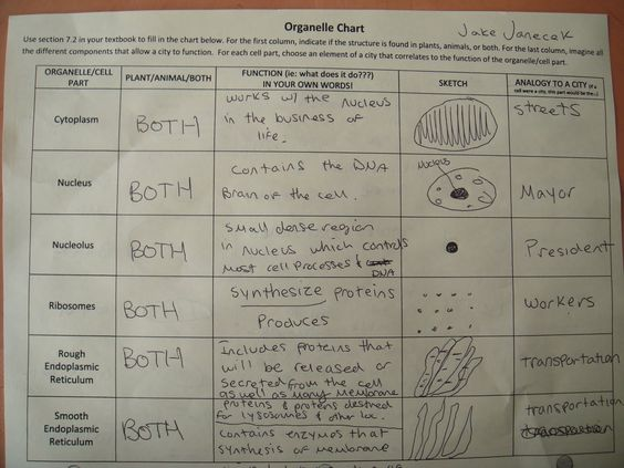 Cell And Organelles Worksheet Worksheets For All
