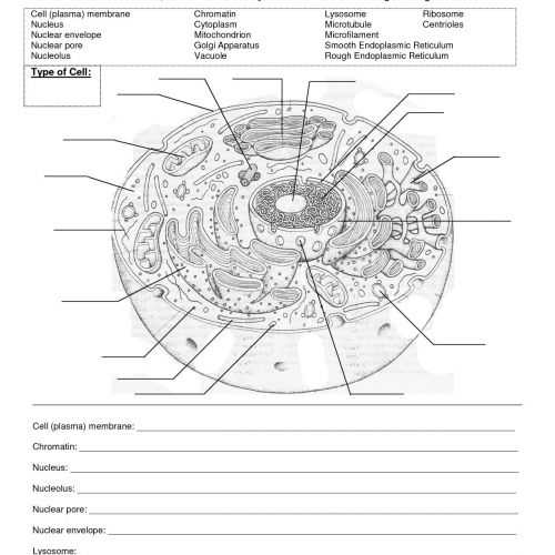 Cell Membrane And Tonicity Worksheet Unique Resume Services Cost