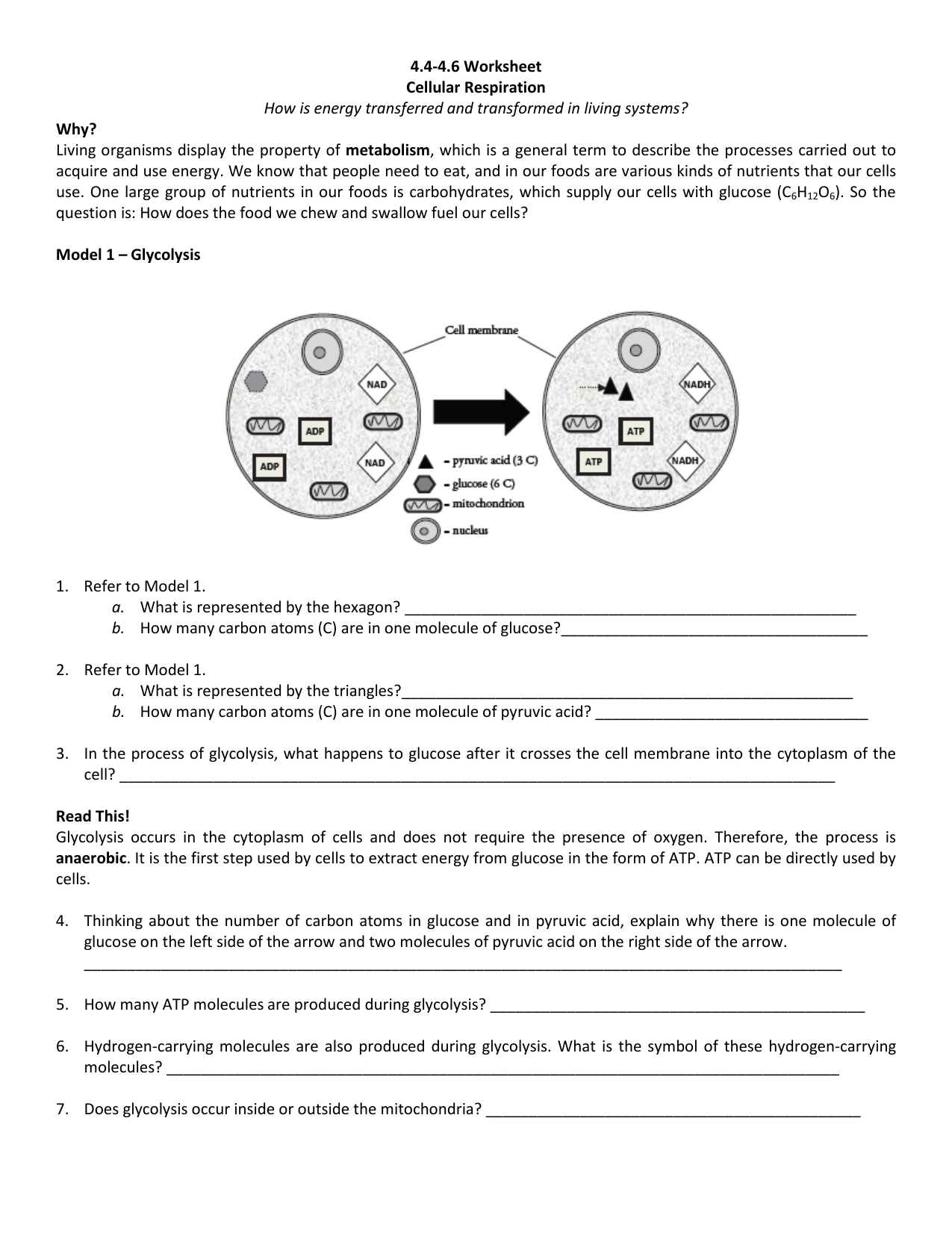 Cellular Respiration Worksheet Key  970172