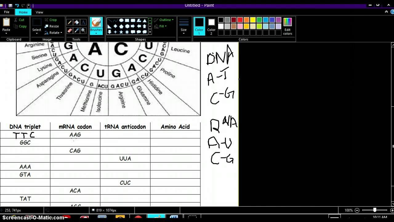 Codon Worksheet Answer Key Biology Junction 442302