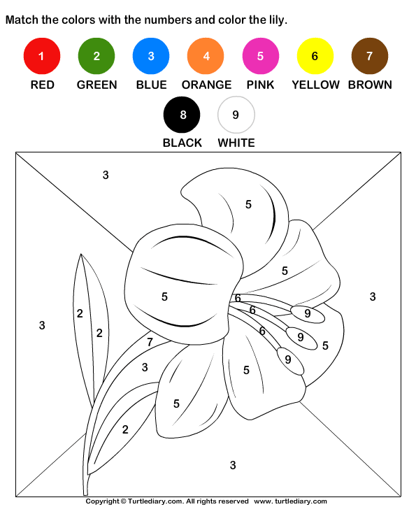 Color By Matching With Numbers Worksheet