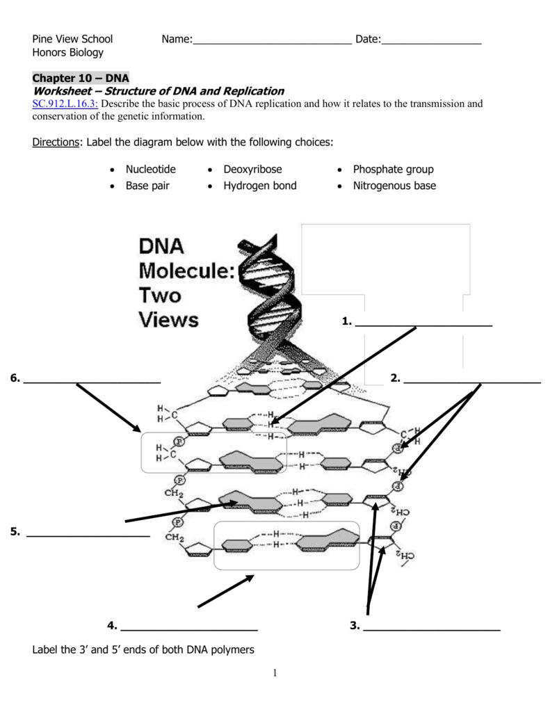 Diagrams Dna 1a Labels