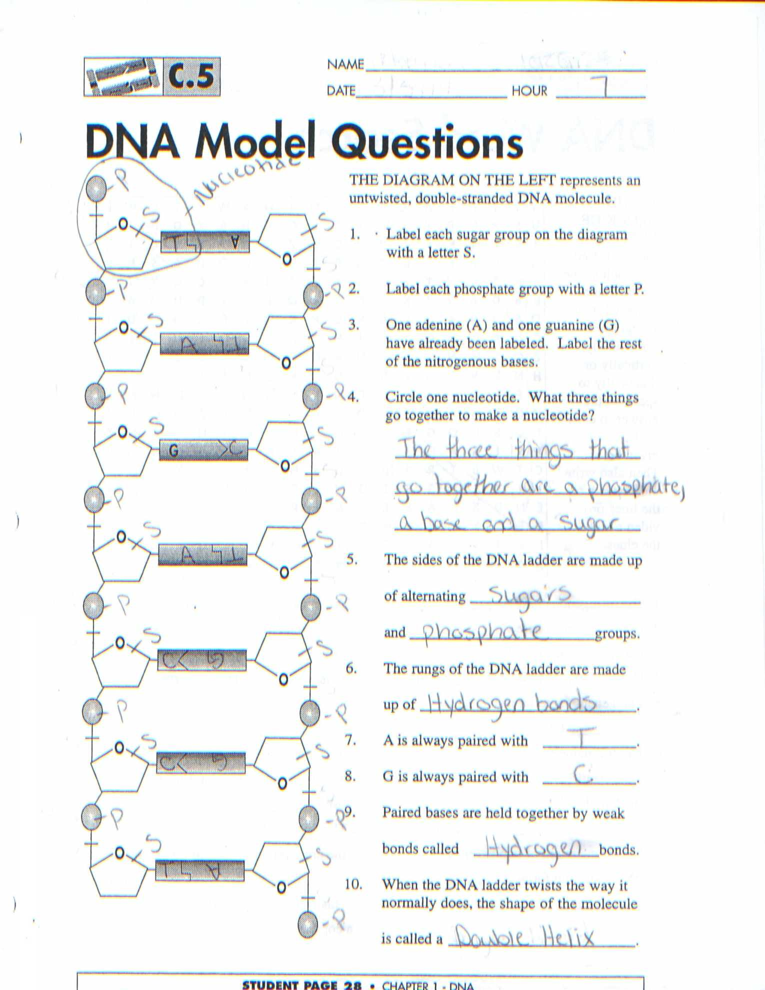 Dna The Molecule Of Heredity Worksheet The Best Worksheets Image