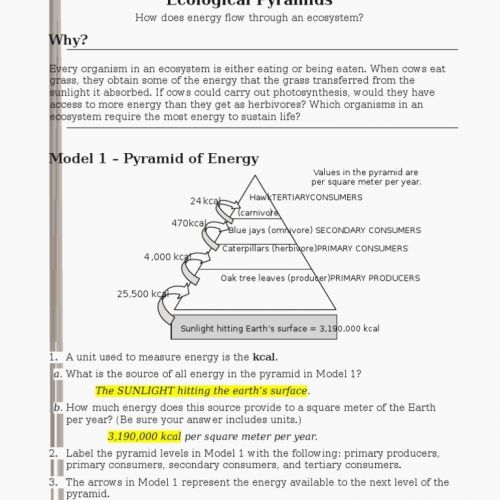 Ecological Pyramids Worksheet Answers Worksheet Understanding The
