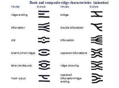 Fingerprint Classification System