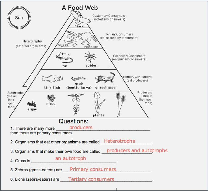 Food Webs And Food Chains Worksheet Answers 21 Inspirational Food