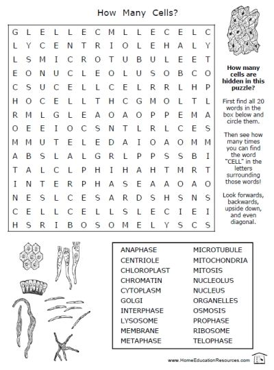 Free Pritnable Printable Science Worksheets Puzzle Search Cells