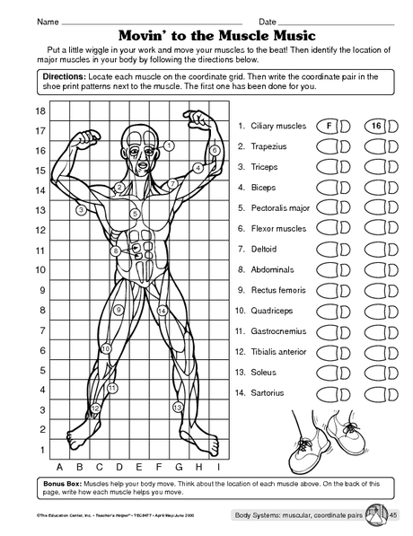 Human Body Systems Worksheets Middle School The Best Worksheets