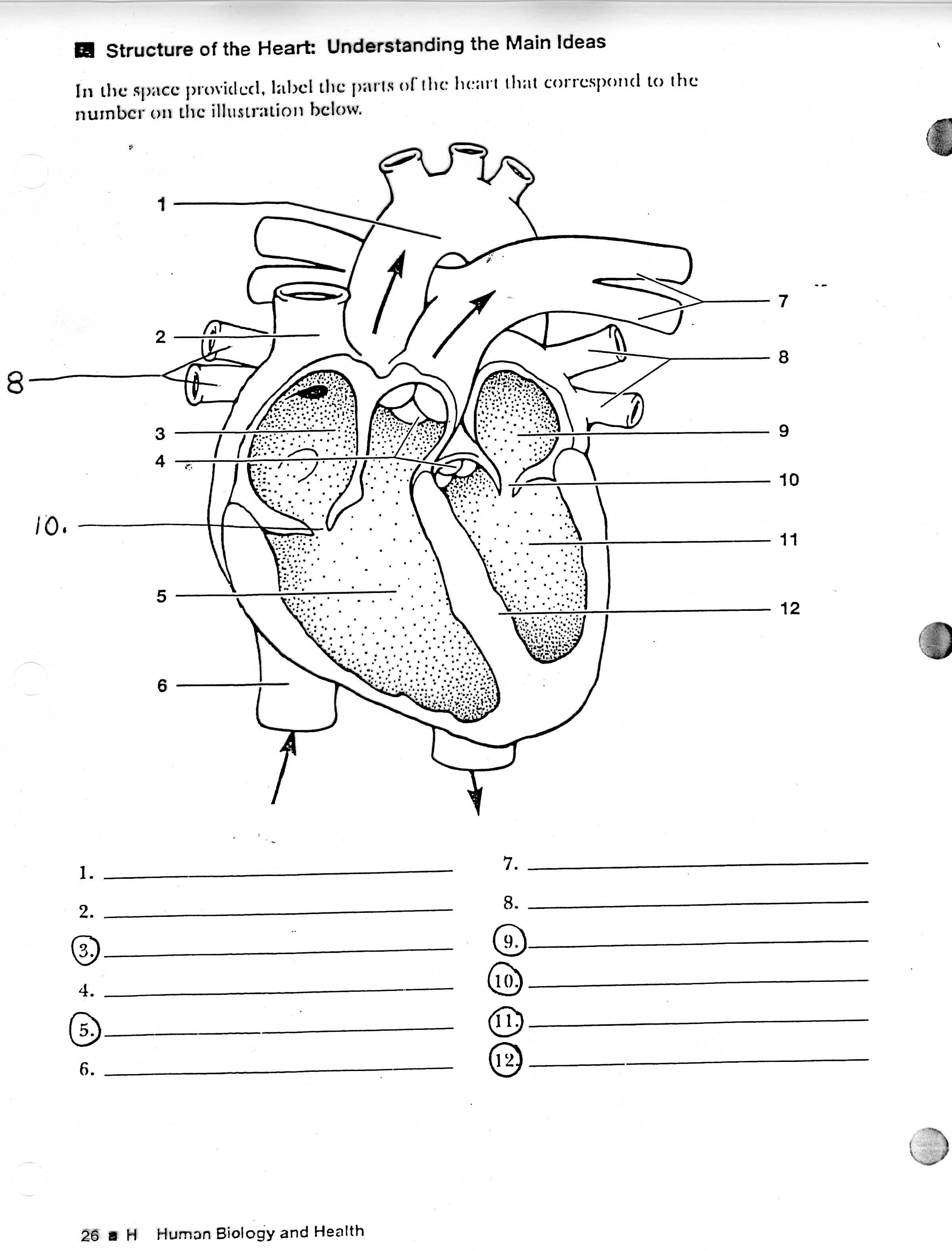Human Circulatory System Worksheet  2654844
