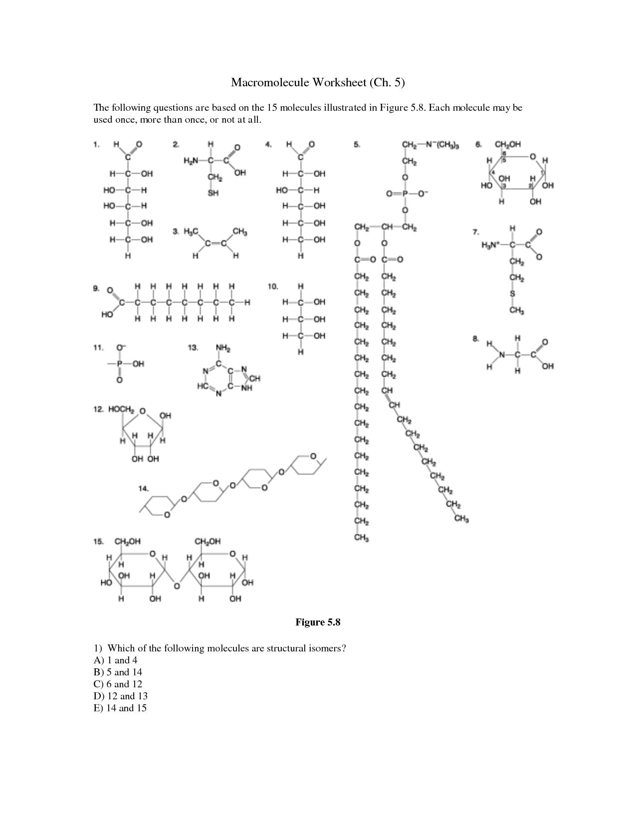 Identifying Biological Molecules Worksheet