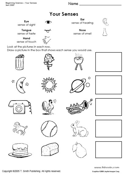 Kindergarten Science Worksheets Pdf  489003