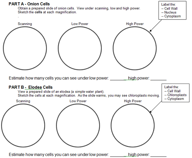 Microscope Lab Worksheet Free Worksheets Library, Microscope Lab