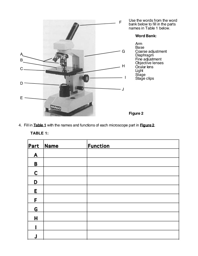 Microscope Lab Worksheet Lesupercoin Printables Worksheets