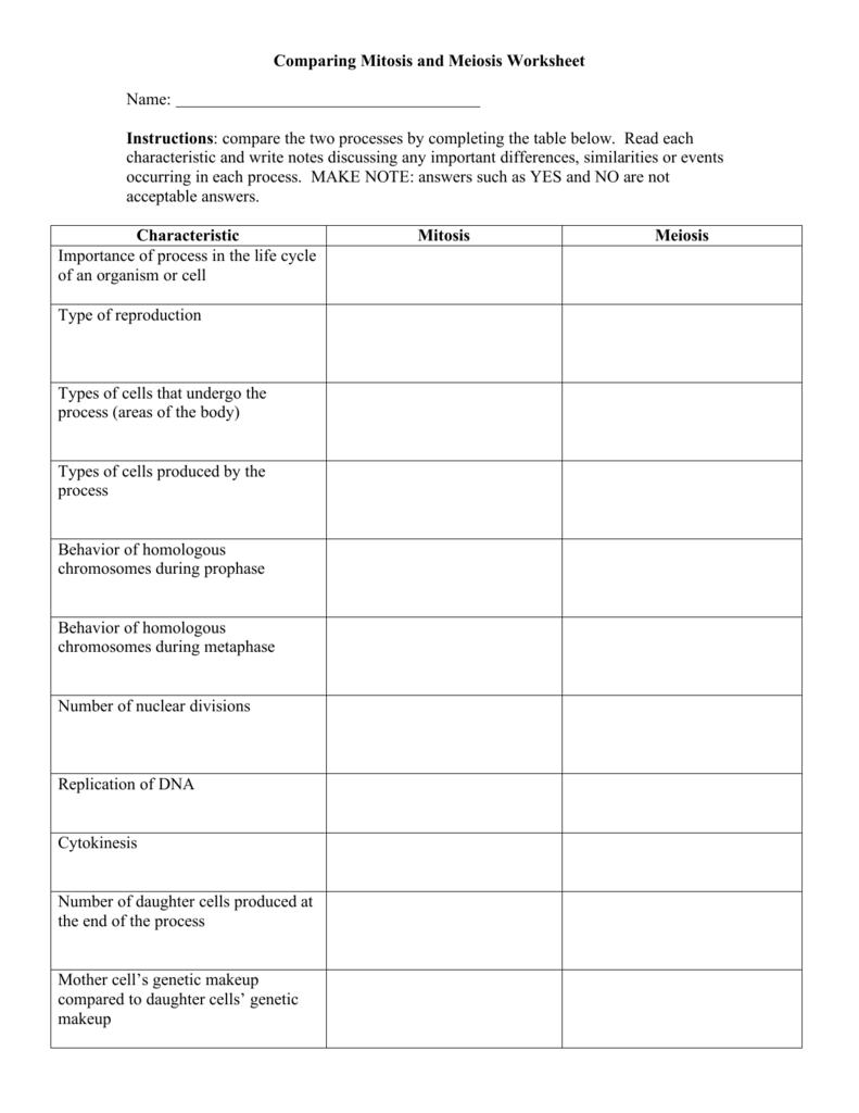 Mitosis And Meiosis Worksheet