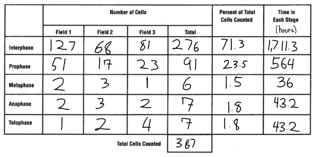 Onion Cell Mitosis Worksheet Answers Worksheets For All