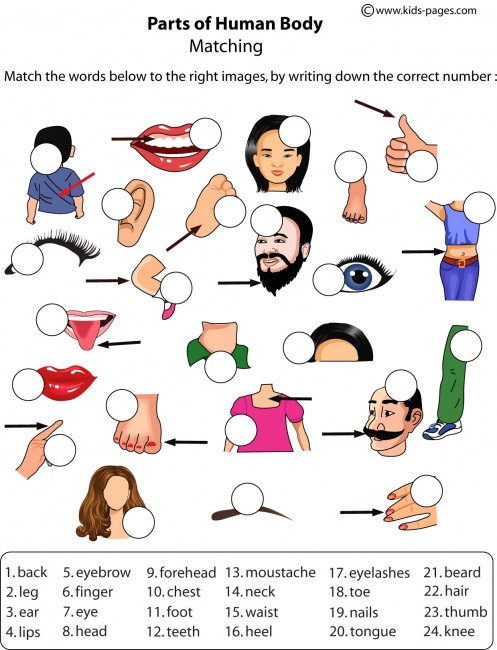 Parts Of The Body For Kindergarten Worksheets Pdf
