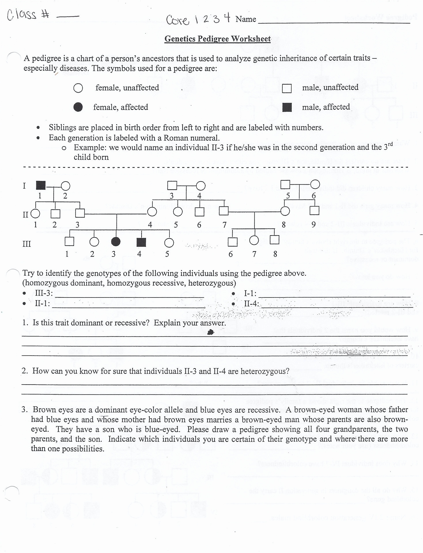 Pedigree Worksheet Side 2 Answers Key