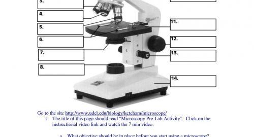 Perfect Microscope Parts And Use Worksheet Answer Key  Az71
