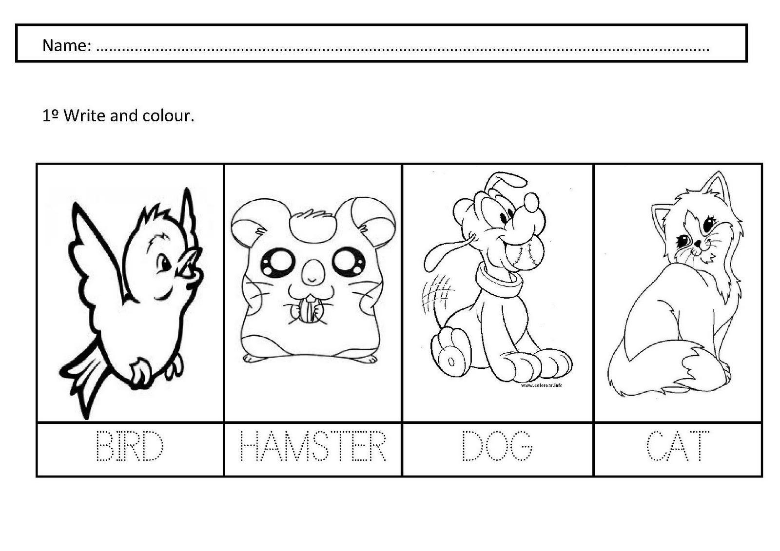 Pets Worksheets For Kindergarten  1036355