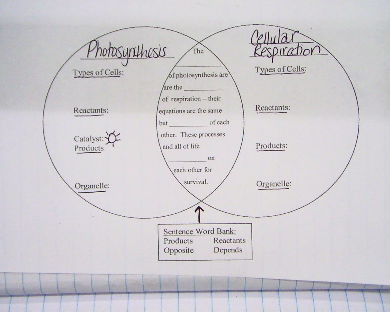 Photosynthesis And Cellular Respiration Venn Diagram
