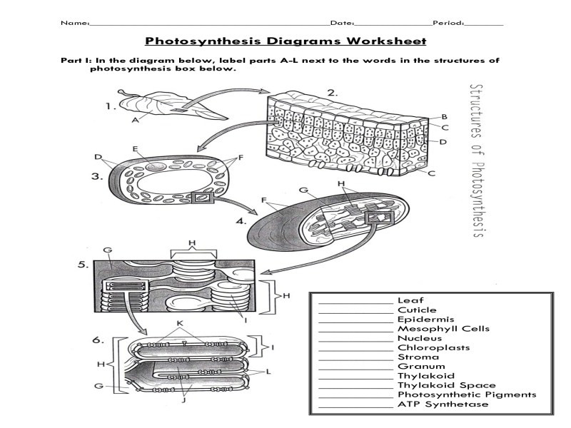 Photosynthesis Worksheet Diagram Answers 785099