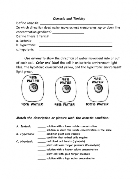Tonicity And Osmosis Worksheet Answers The Best Worksheets Image