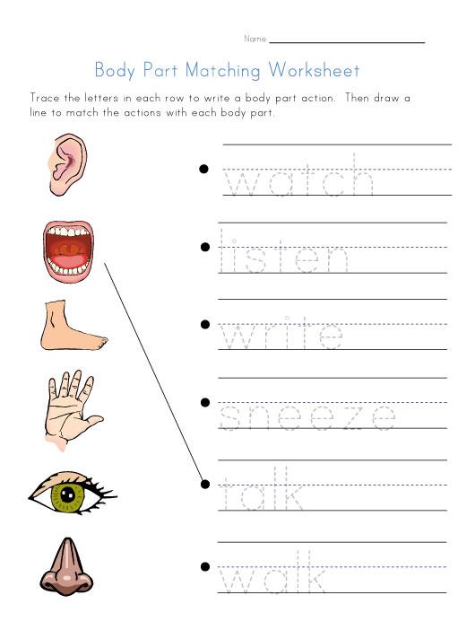 Worksheet Body Parts For Kindergarten