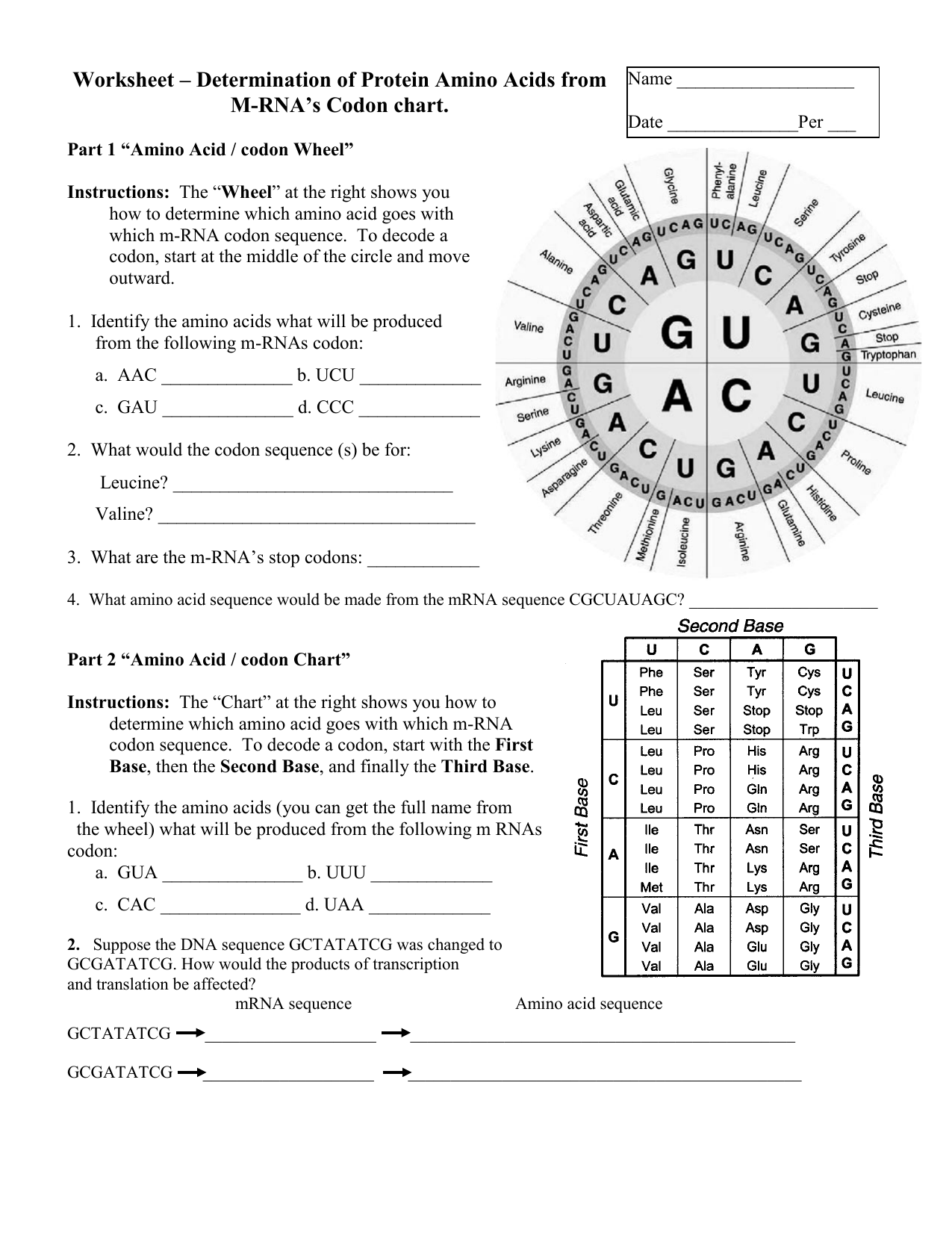 Worksheet Determination Of Protein Amino Acids From Mrna Codon