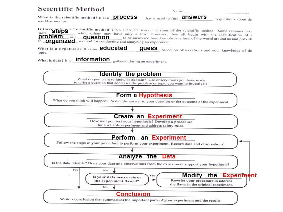 Worksheet Scientific Method Answers  353779