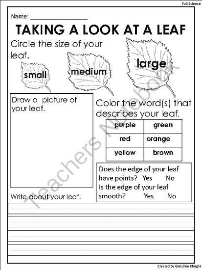 Fall Leaf Observation Sheet