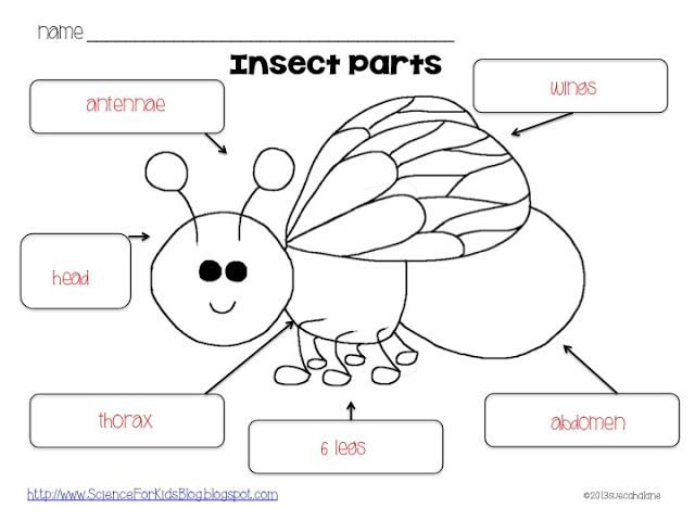 Insect Body Parts Worksheet