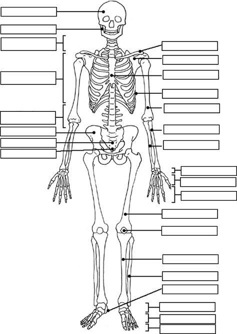 Skeleton Label Worksheet With Answer Key