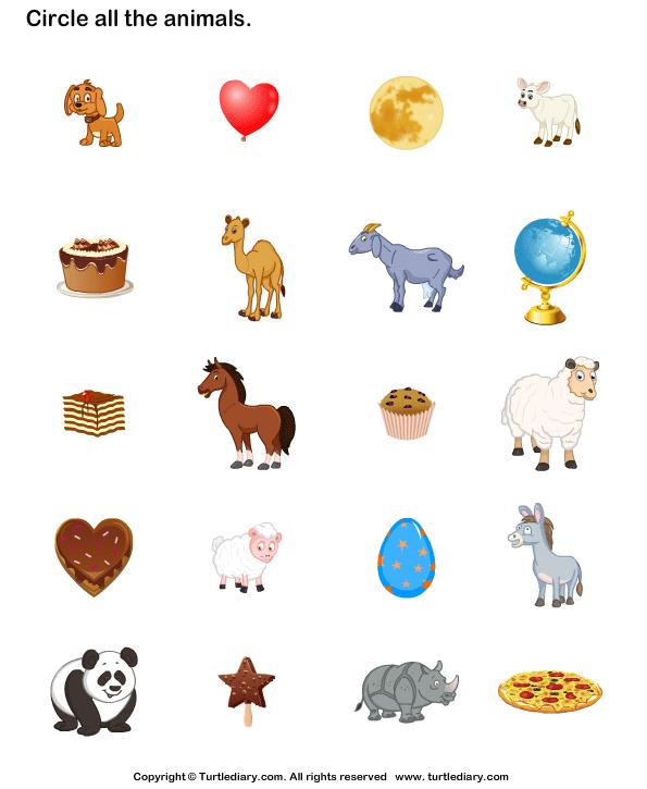 Animals Identification Worksheet