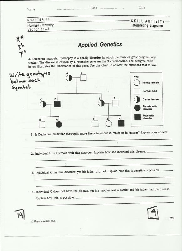 Applied Genetics Pedigree Worksheet Answers Heredity Worksheets